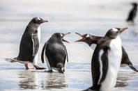 Penguins argue