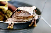 A frog in a garden plant pot