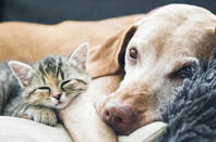 dog and cat cuddle up