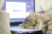 Cat sleeps on laptop