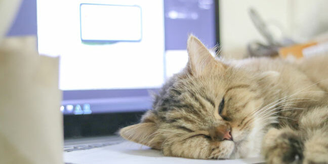 Cat sleeps on laptop
