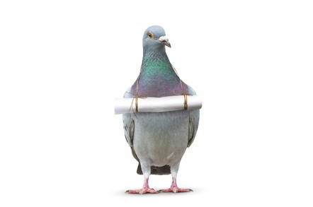 Pigeon with note attached