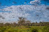 Locust swarm - Shutterstock