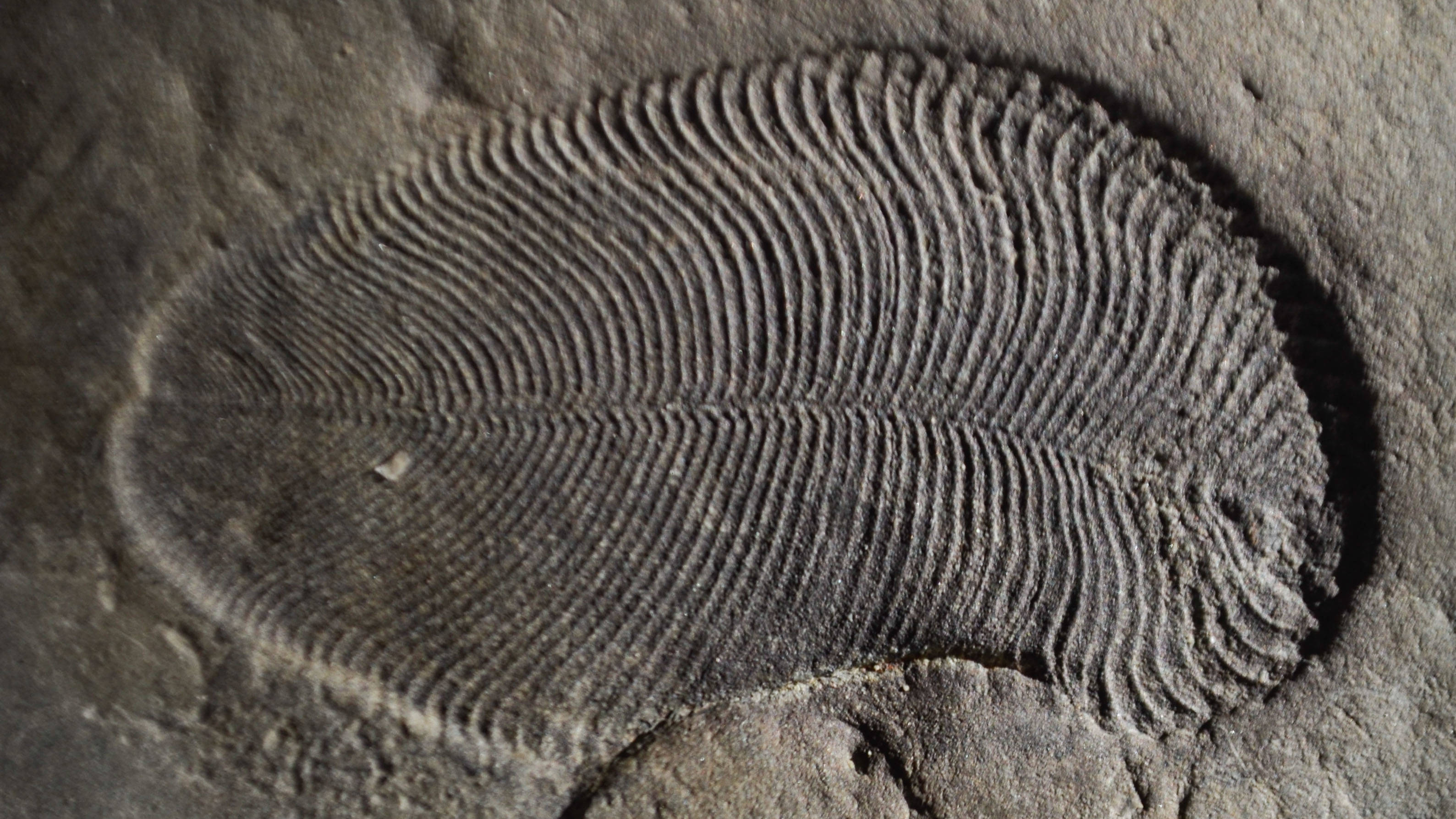 558 million-year-old fossil is world's oldest known animal, scientists say