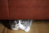 Cat under sofa