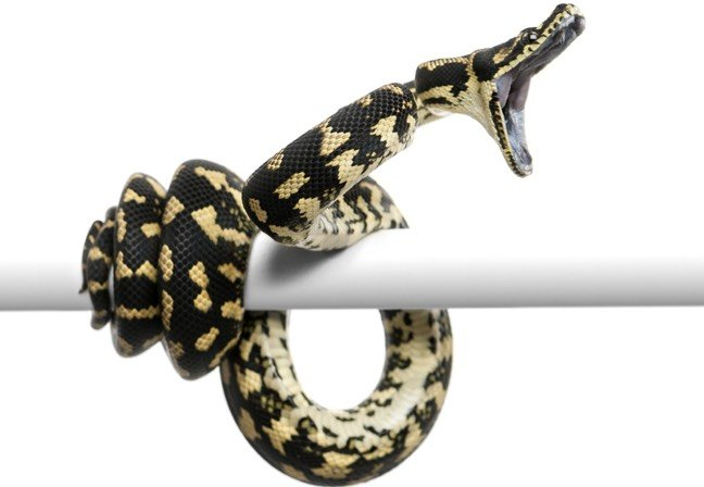 Mega-bites of code: Python snakes into 1st place for cyber-attacks