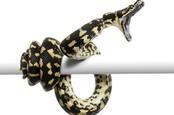 Python attacking