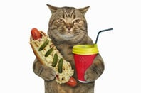 Cat holds a hotdog and a takeway coffee
