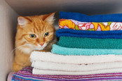 cat sits on clean folded laundry