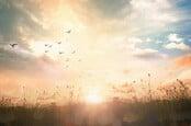 Birds flying across meadow in autumn sunrise