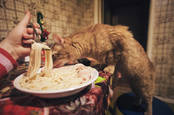 A cat eating a bowl of spaghetti