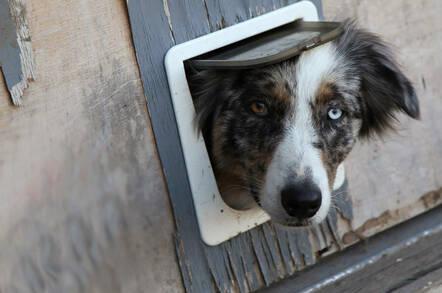 Dog looking through a doggie door