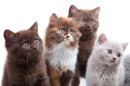 Four wide-eyed kittens