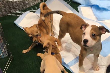 Puppies at RSA