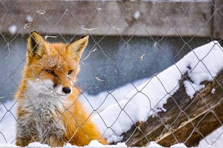 Newly born Firefox 71 emerges from its den – with its own