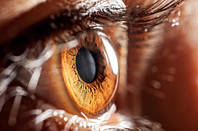 brown eye iris