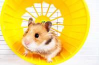 mouse_treadmill