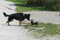 Small dog versus bigger dog