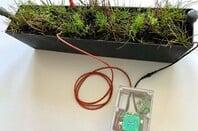 Lacuna Space and Plant-e IoT Sensor (pic: Lacuna)