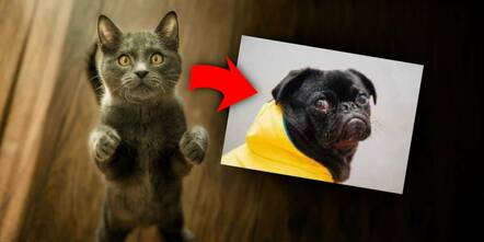 Example of a cat scaled down and turning into a dog