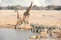 Animals gather around a watering hole