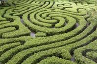 A hedge maze