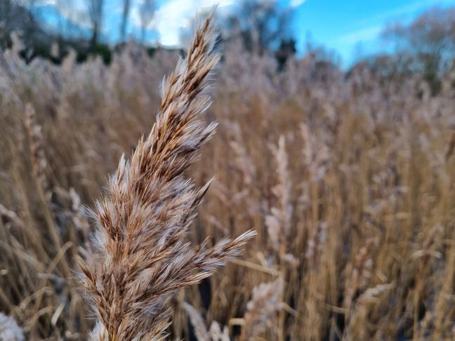 Samsung Galaxy S21 review - camera shot