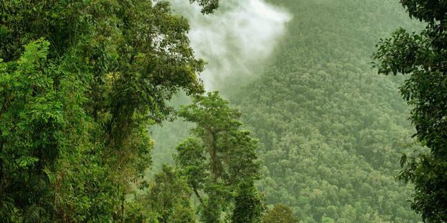 tropical northern australia rainforest
