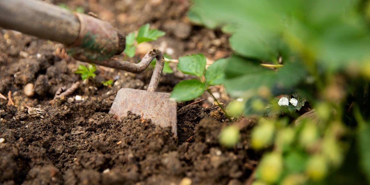 theregister.com - Matt Dupuy - Facebook gardening group triumphs over slapdash Zuck censorbots